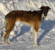 Zloyana 14.02.2010